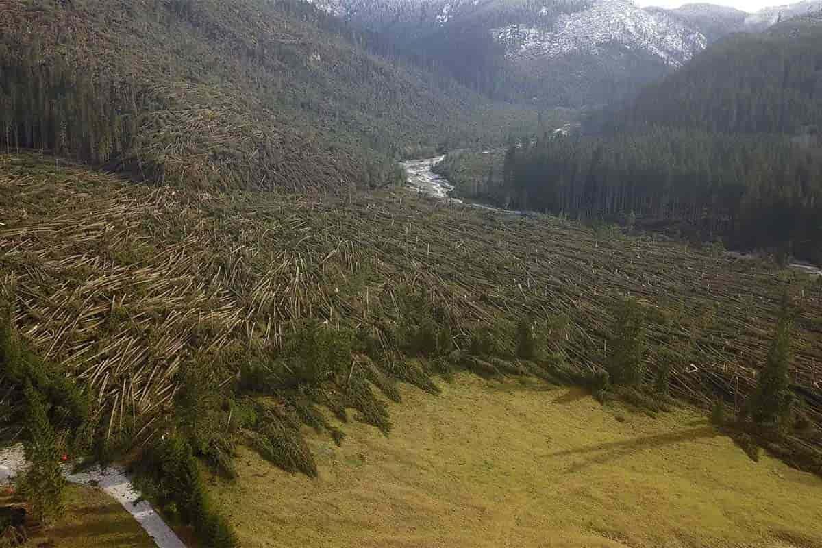 tempesta vaia bosco distrutto trentino alto adige