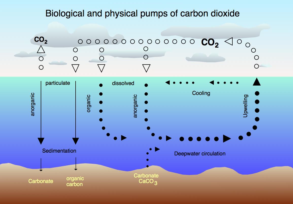 ciclo co2 atrmosfera e oceano