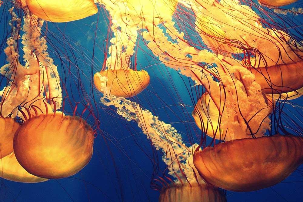 Oceano, il polmone blu della terra
