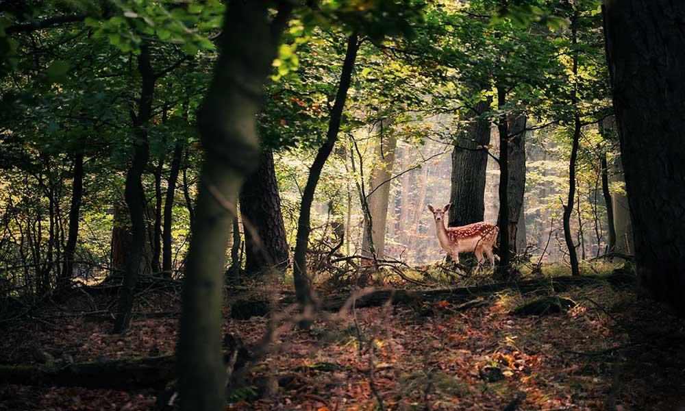 bosco bene comune