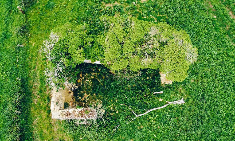habitat boschivo