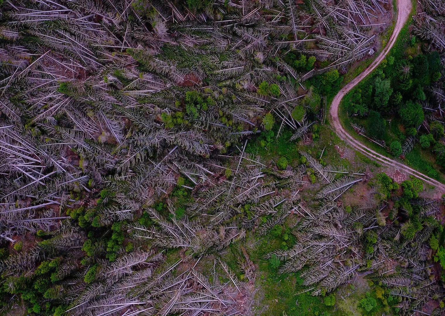 rinascita boschi