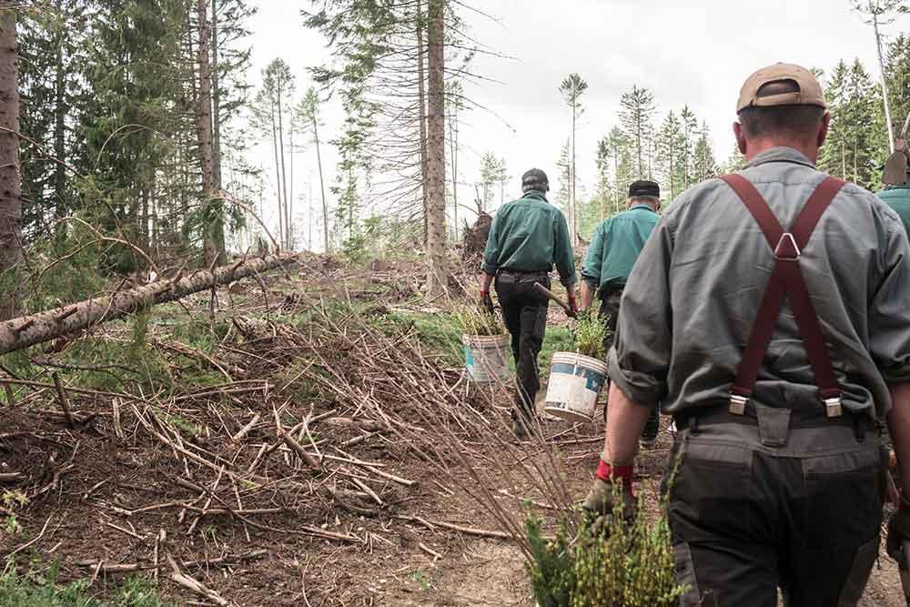 ripiantumazione alberi vaia