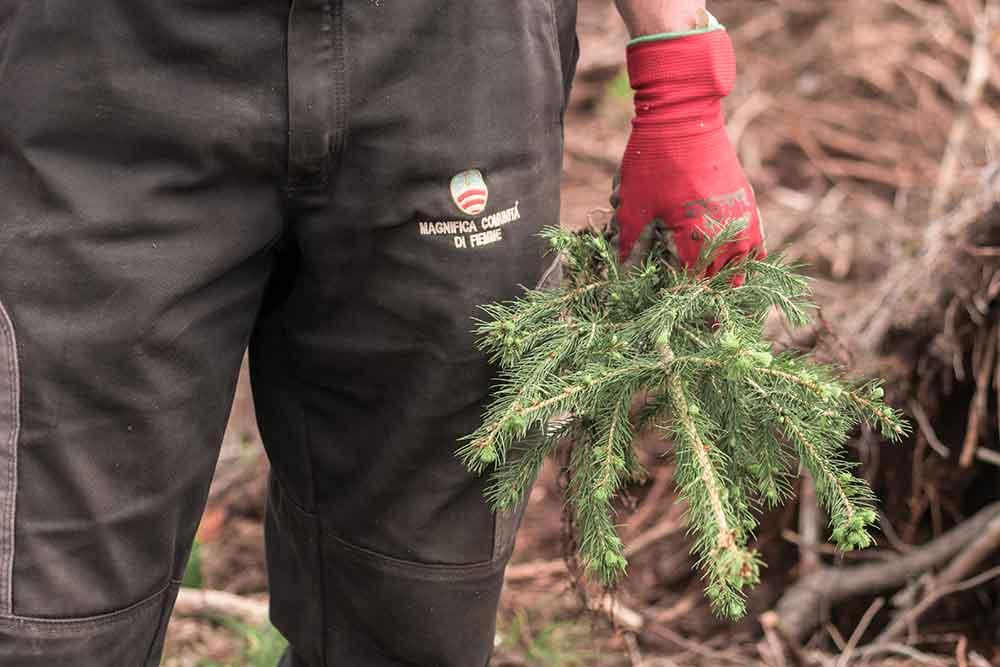 vaia ripiantumazione albero