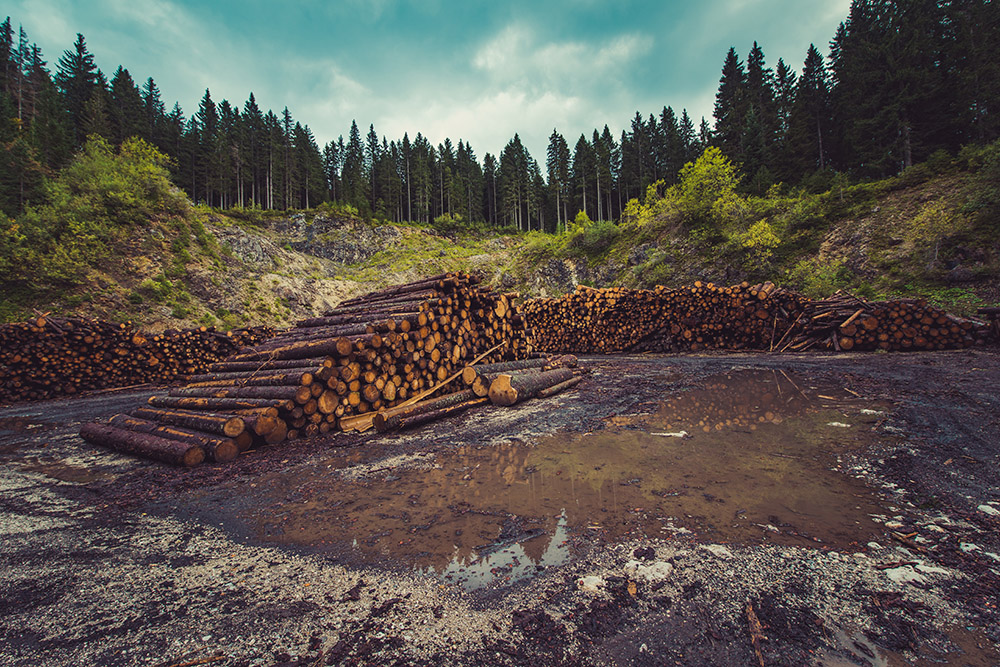 tronchi foreste