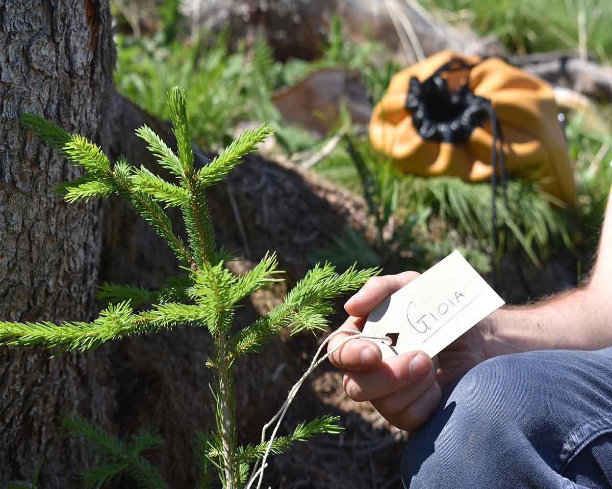ripiantumazione-alberi